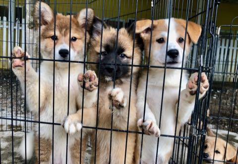 犬の殺処分ゼロ目指す日本最大NPOに捜査が入った理由 命守るため覚悟の全頭引き受け_1.jpg