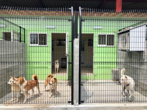 犬の殺処分ゼロ目指す日本最大NPOに捜査が入った理由 命守るため覚悟の全頭引き受け_6.jpg