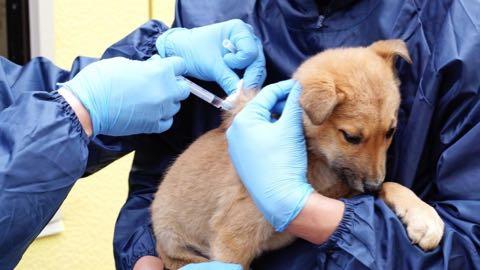犬の殺処分ゼロ目指す日本最大NPOに捜査が入った理由 命守るため覚悟の全頭引き受け_8.jpg