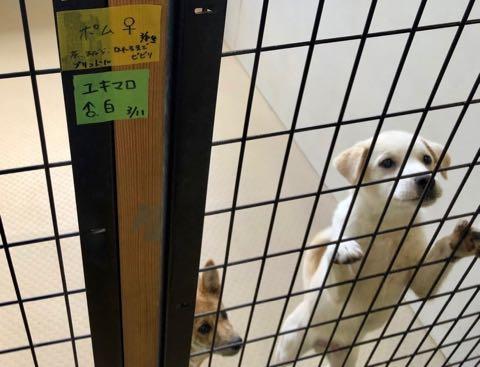 犬の殺処分ゼロ目指す日本最大NPOに捜査が入った理由 命守るため覚悟の全頭引き受け_9.jpg