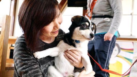犬の殺処分ゼロ目指す日本最大NPOに捜査が入った理由 命守るため覚悟の全頭引き受け_10.jpg