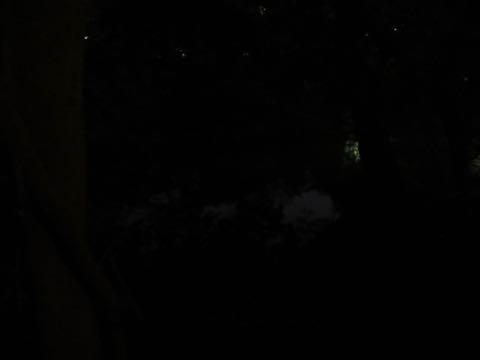 ウェルシュ・コーギー・ペンブロークこいぬ情報フントヒュッテウェルシュコーギーペンブローク子犬画像コーギーしっぽ付き尻尾付きしっぽつき断尾していないコーギー出産情報性格子犬の社会化コーギー家族募集中 Welsh Corgi Pembroke _ 1798.jpg
