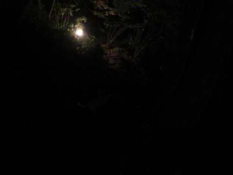 ウェルシュ・コーギー・ペンブロークこいぬ情報フントヒュッテウェルシュコーギーペンブローク子犬画像コーギーしっぽ付き尻尾付きしっぽつき断尾していないコーギー出産情報性格子犬の社会化コーギー家族募集中 Welsh Corgi Pembroke _ 1799.jpg