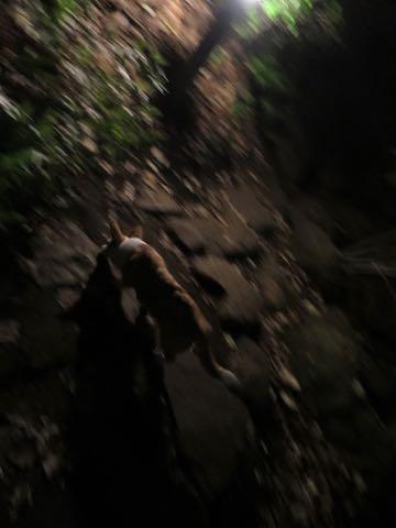 ウェルシュ・コーギー・ペンブロークこいぬ情報フントヒュッテウェルシュコーギーペンブローク子犬画像コーギーしっぽ付き尻尾付きしっぽつき断尾していないコーギー出産情報性格子犬の社会化コーギー家族募集中 Welsh Corgi Pembroke _ 1801.jpg