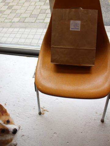 ウェルシュ・コーギー・ペンブロークこいぬ情報フントヒュッテウェルシュコーギーペンブローク子犬画像コーギーしっぽ付き尻尾付きしっぽつき断尾していないコーギー出産情報性格子犬の社会化コーギー家族募集中 Welsh Corgi Pembroke _ 2100.jpg