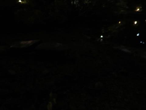 ウェルシュ・コーギー・ペンブロークこいぬ情報フントヒュッテウェルシュコーギーペンブローク子犬画像コーギーしっぽ付き尻尾付きしっぽつき断尾していないコーギー出産情報性格子犬の社会化コーギー家族募集中 Welsh Corgi Pembroke _ 2212.jpg