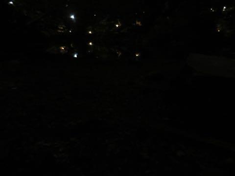 ウェルシュ・コーギー・ペンブロークこいぬ情報フントヒュッテウェルシュコーギーペンブローク子犬画像コーギーしっぽ付き尻尾付きしっぽつき断尾していないコーギー出産情報性格子犬の社会化コーギー家族募集中 Welsh Corgi Pembroke _ 2214.jpg