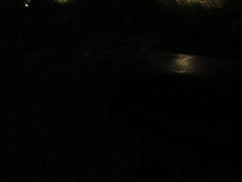 ウェルシュ・コーギー・ペンブロークこいぬ情報フントヒュッテウェルシュコーギーペンブローク子犬画像コーギーしっぽ付き尻尾付きしっぽつき断尾していないコーギー出産情報性格子犬の社会化コーギー家族募集中 Welsh Corgi Pembroke _ 2215.jpg
