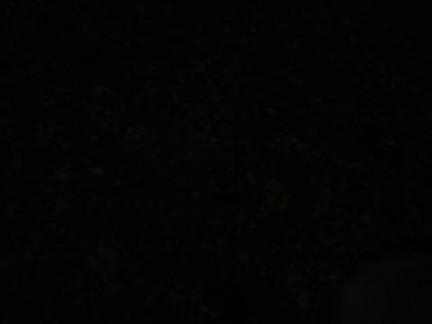 ウェルシュ・コーギー・ペンブロークこいぬ情報フントヒュッテウェルシュコーギーペンブローク子犬画像コーギーしっぽ付き尻尾付きしっぽつき断尾していないコーギー出産情報性格子犬の社会化コーギー家族募集中 Welsh Corgi Pembroke _ 2216.jpg