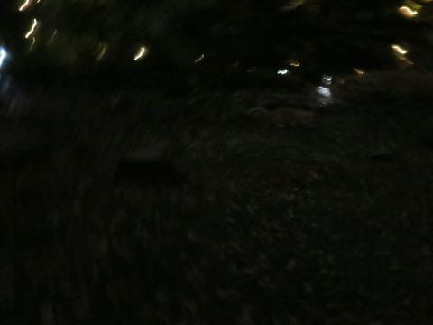 ウェルシュ・コーギー・ペンブロークこいぬ情報フントヒュッテウェルシュコーギーペンブローク子犬画像コーギーしっぽ付き尻尾付きしっぽつき断尾していないコーギー出産情報性格子犬の社会化コーギー家族募集中 Welsh Corgi Pembroke _ 2217.jpg