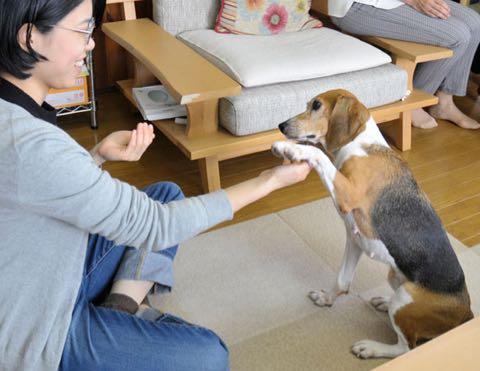 ペットになった元実験犬「しょうゆ」 獣医大生が譲渡願い出る 実験動物 酪農学園大 北海道江別市 2.jpg