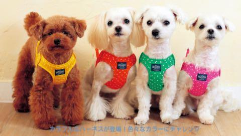 LAMZY ソフトフェザーハーネス 画像 ラムジー フェザー ハーネス 気管支への負担軽減 気管支炎 気管虚脱 犬 人気 ハーネス 販売 フントヒュッテ 東京 1.jpg