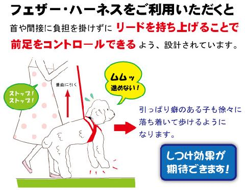 LAMZY ソフトフェザーハーネス 画像 ラムジー フェザー ハーネス 気管支への負担軽減 気管支炎 気管虚脱 犬 人気 ハーネス 販売 フントヒュッテ 東京 4.jpg