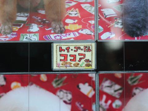 お正月 生地 和柄 凧揚げ コマ回し お手玉 花札 竹馬 羽根つき だるま落とし 折り紙 日本の風景 プリント生地 柄 ファブリック 画像 写真撮影 背景 トリミングサロン フントヒュッテ 2019年元旦 _ 16.jpg