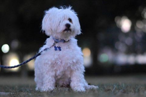 犬を欲しがる我が子に父親がつきつけた過激な「犬を飼うにあたっての契約書」 _ 1.jpg