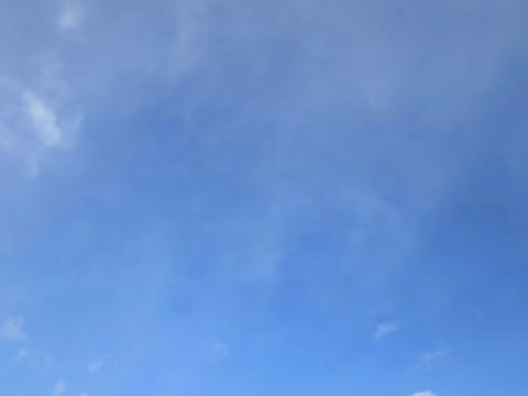 ビションフリーゼこいぬ情報フントヒュッテビション性格どこでこいぬ画像子犬の社会化ビション赤ちゃんチャンピオン直子かわいいビションフリーゼ東京ビション出産情報性格ビション家族募集中_8.jpg