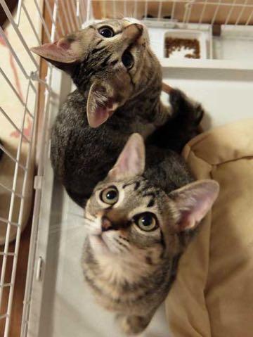 猫ブームが迎える悲劇 容易な「増産」で純血種の野良も増加_1.jpg