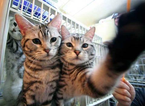 猫ブームが迎える悲劇 容易な「増産」で純血種の野良も増加_2.jpg