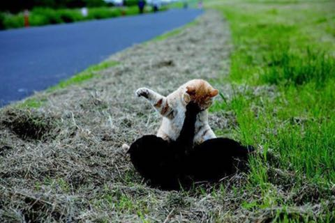 「残念すぎるネコ」写真展が話題に かわいすぎるネコたちに癒やされる.jpg
