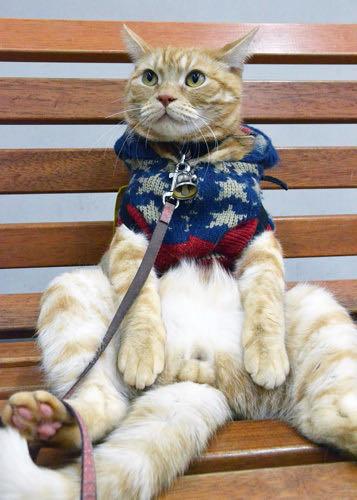 ベンチが好き。カフェでくつろぐ「アイドル猫」 癒しの「マロン」滋賀で人気者 _ 1.jpg