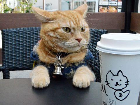 ベンチが好き。カフェでくつろぐ「アイドル猫」 癒しの「マロン」滋賀で人気者 _ 2.jpg