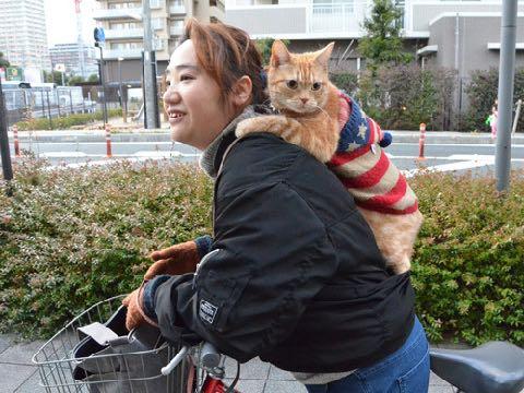 ベンチが好き。カフェでくつろぐ「アイドル猫」 癒しの「マロン」滋賀で人気者 _ 3.jpg