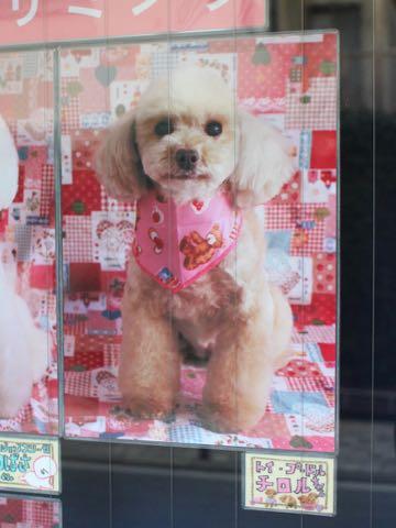バレンタイン2019 ハート 柄 ピンク 色 生地 ファブリック かわいいプリント生地 画像 写真撮影 背景 トリミングサロン フントヒュッテ _ 4.jpg