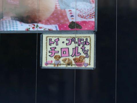 バレンタイン2019 ハート 柄 ピンク 色 生地 ファブリック かわいいプリント生地 画像 写真撮影 背景 トリミングサロン フントヒュッテ _ 5.jpg