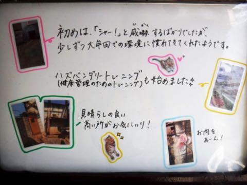 ヒョウの家系図が話題 アムールヒョウ ベルとチャイムの子は ピン ポン ダッシュ 大牟田市動物園 _ 9.jpg