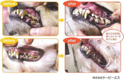 マウスクリーナー 飲む歯磨き習慣 歯磨き嫌いな愛犬・猫でも、飲み水にまぜるだけでOKの画期的なマウスケア 犬の歯磨き KPS ケーピーエス 4.jpg
