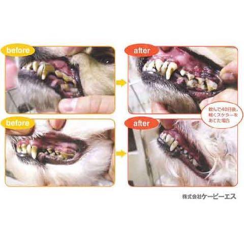 マウスクリーナー 飲む歯磨き習慣 歯磨き嫌いな愛犬・猫でも、飲み水にまぜるだけでOKの画期的なマウスケア 犬の歯磨き KPS ケーピーエス バニラミント味 3.jpg