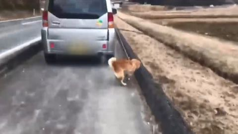 """""""車に乗りながら犬を散歩""""動画に批判殺到…考えたい高齢者のペット飼育 _ 1.jpg"""