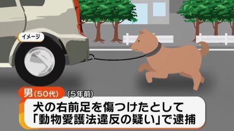"""""""車に乗りながら犬を散歩""""動画に批判殺到…考えたい高齢者のペット飼育 _ 2.jpg"""
