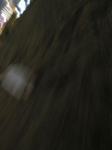 ビションフリーゼこいぬ情報フントヒュッテビション性格どこでこいぬ画像子犬の社会化ビション赤ちゃんチャンピオン直子かわいいビションフリーゼ東京ビション出産情報性格ビション家族募集中_438.jpg