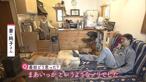 """【特集】老人ならぬ「老犬ホーム」に密着! ペットも高齢化で""""ムダ吠え""""""""認知症""""も _ 3.jpg"""