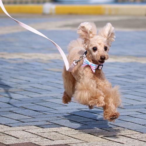 犬 首輪 リード iDog アイドッグ リード・カラーセット ピンボーダー×パステルボーダーリボン #犬 #首輪 #リード #iDog #アイドッグ リード・カラーセット ピンボーダー×パステルボーダーリボン_ 通販7.jpg