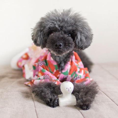 iDog&iCat アイドッグアイキャット ラテックスTOY 犬のおもちゃ 東京 フントヒュッテ 画像 お餅 コマメ ラテックスTOY _ 6.jpg