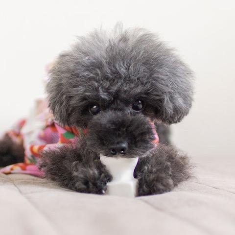 iDog&iCat アイドッグアイキャット ラテックスTOY 犬のおもちゃ 東京 フントヒュッテ 画像 お餅 コマメ ラテックスTOY _ 7.jpg