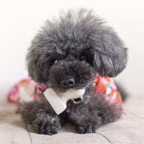 iDog&iCat アイドッグアイキャット ラテックスTOY 犬のおもちゃ 東京 フントヒュッテ 画像 お餅 コマメ ラテックスTOY _ 8.jpg