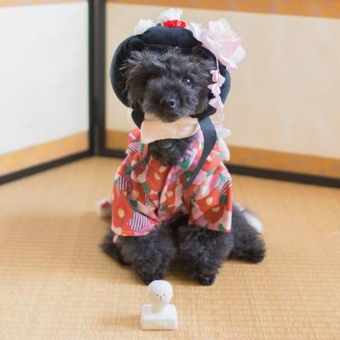 iDog&iCat アイドッグアイキャット ラテックスTOY 犬のおもちゃ 東京 フントヒュッテ 画像 お餅 コマメ ラテックスTOY _ 10.jpg