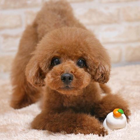 iDog&iCat アイドッグアイキャット ラテックスTOY 犬のおもちゃ 東京 フントヒュッテ 画像 かがみもち 鏡餅 ラテックスTOY _ 5.jpg