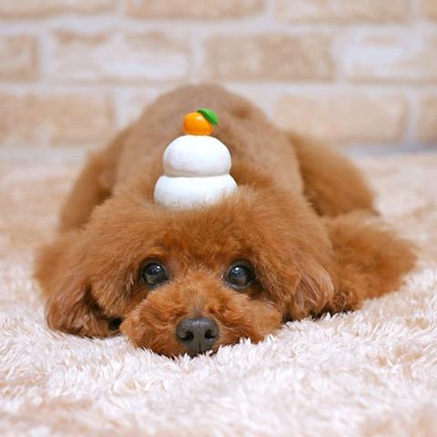 iDog&iCat アイドッグアイキャット ラテックスTOY 犬のおもちゃ 東京 フントヒュッテ 画像 かがみもち 鏡餅 ラテックスTOY _ 6.jpg