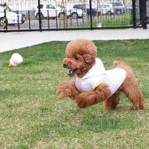 iDog&iCat アイドッグアイキャット ラテックスTOY 犬のおもちゃ 東京 フントヒュッテ 画像 かがみもち 鏡餅 ラテックスTOY _ 7.jpg