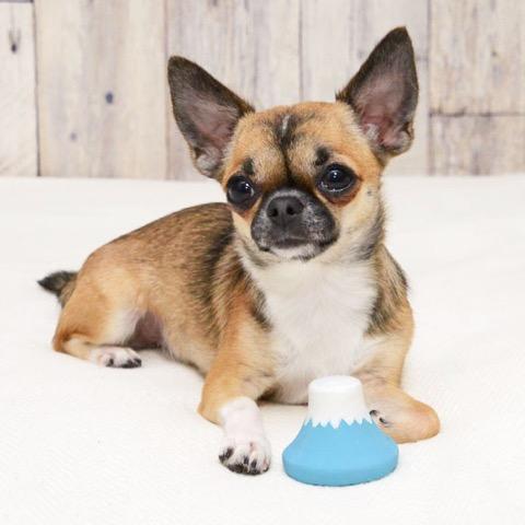 iDog&iCat アイドッグアイキャット ラテックスTOY 犬のおもちゃ 東京 フントヒュッテ 画像 富士山ラテックスTOY _ 5.jpg