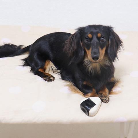 iDog&iCat アイドッグアイキャット ラテックスTOY 犬のおもちゃ 東京 フントヒュッテ 画像 コロリンおにぎりラテックスTOY _ 5.jpg
