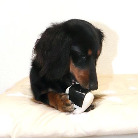 iDog&iCat アイドッグアイキャット ラテックスTOY 犬のおもちゃ 東京 フントヒュッテ 画像 コロリンおにぎりラテックスTOY _ 6.jpg
