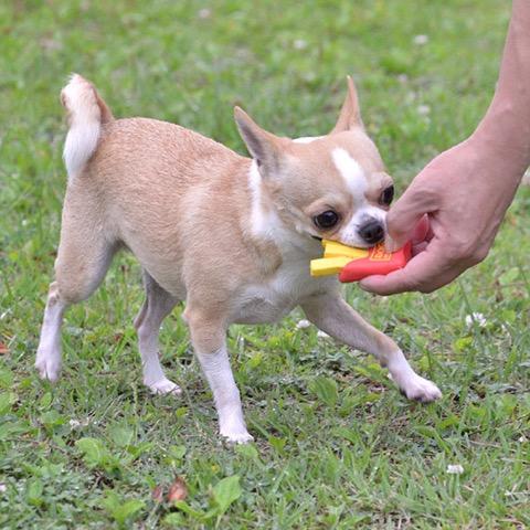 iDog&iCat アイドッグアイキャット ラテックスTOY 犬のおもちゃ 東京 フントヒュッテ 画像 フライドポテトラテックスTOY _ 6.jpg