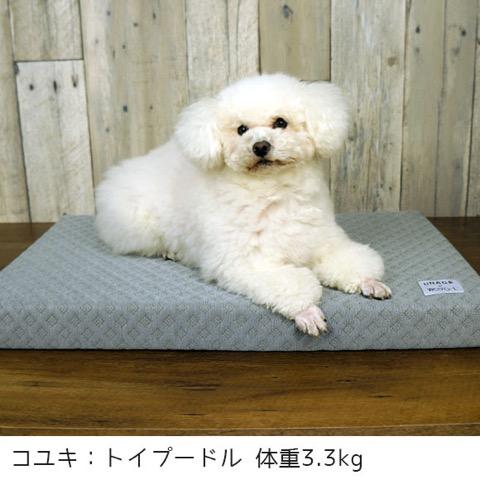 iDog&iCat アイドッグアイキャット 犬猫ベッド 冷感カバー ひんやりジェル 夏を快適に 暑さ対策 犬 低反発マット 東京 フントヒュッテ 画像 犬用ベッド  _ 4.jpg