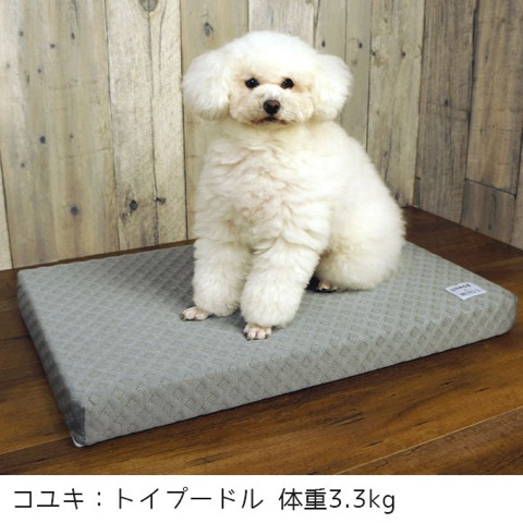 iDog&iCat アイドッグアイキャット 犬猫ベッド 冷感カバー ひんやりジェル 夏を快適に 暑さ対策 犬 低反発マット 東京 フントヒュッテ 画像 犬用ベッド  _ 5.jpg