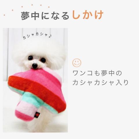 iDog&iCat アイドッグアイキャット iToy 国産ペット用おもちゃ POPな柄のキノコ型おもちゃ カシャカシャ入りでワンコも夢中に 東京 フントヒュッテ 画像 犬用おもちゃ _ 6.jpg